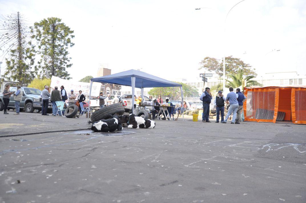 Tamberos entrerrianos llevaron terneros a la protesta frente a la Casa Gris (Foto APFDigital)